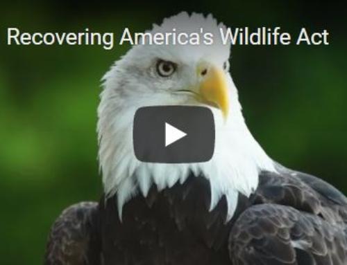 Senate Bill 2372 Recovering America's Wildlife Act